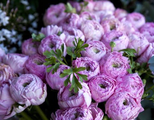 Hoa mẫu đơn phong thủy màu tím